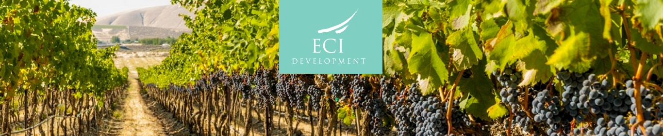 ECI-Argentina-Vineyard